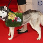 Jenny Packham wants you to help find a home for Colleen the Husky