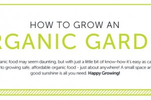 Go organic! Here's how to grow your own fruit and veg…