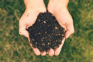 Coffee & Compost: Growing From The Ground Up